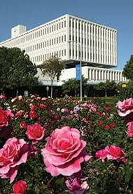 Library with Roses