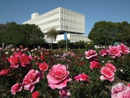 library-with-roses